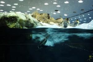 Niesamowitego pingwinarium