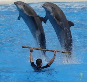Fantastycznych show z udziałem delfinów