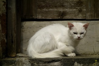 Na każdym kroku miau miau