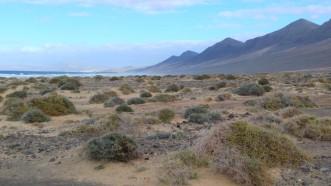 plaża Cofete z oddali